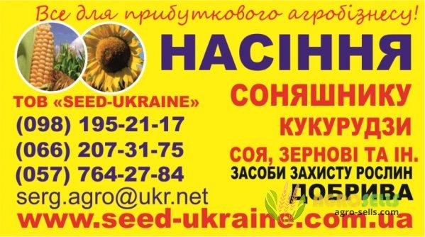 Пропонуємо купити насіння соняшнику