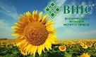Предлагаем семена подсолнечника Сонячный настрий от про