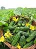 классные семена трав, цветов ,овощей