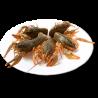 Живые Раки Маленькие ( 40-60 гр это 8-10 см) 17-25 шт/кг