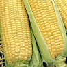 Сладкая кукуруза 2018
